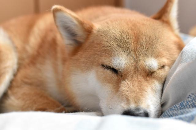 レネバル錠が愛犬に処方され1週間後に採尿。でも、いろいろ不安が・・・